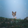 Bryr sig någon om de övergivna Corona-katterna?